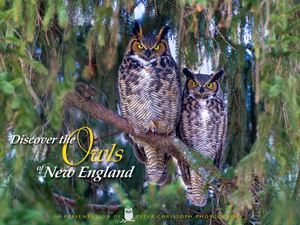 owls of new england